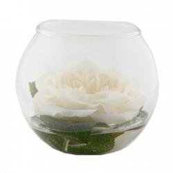 Rose Anouk cream im runden Glas Weiß