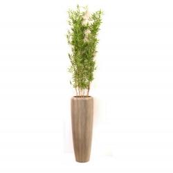 Pflanzarrangement Oriental Bamboo in 2 Größen