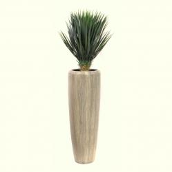 Pflanzarrangement Yucca in 2 Größen